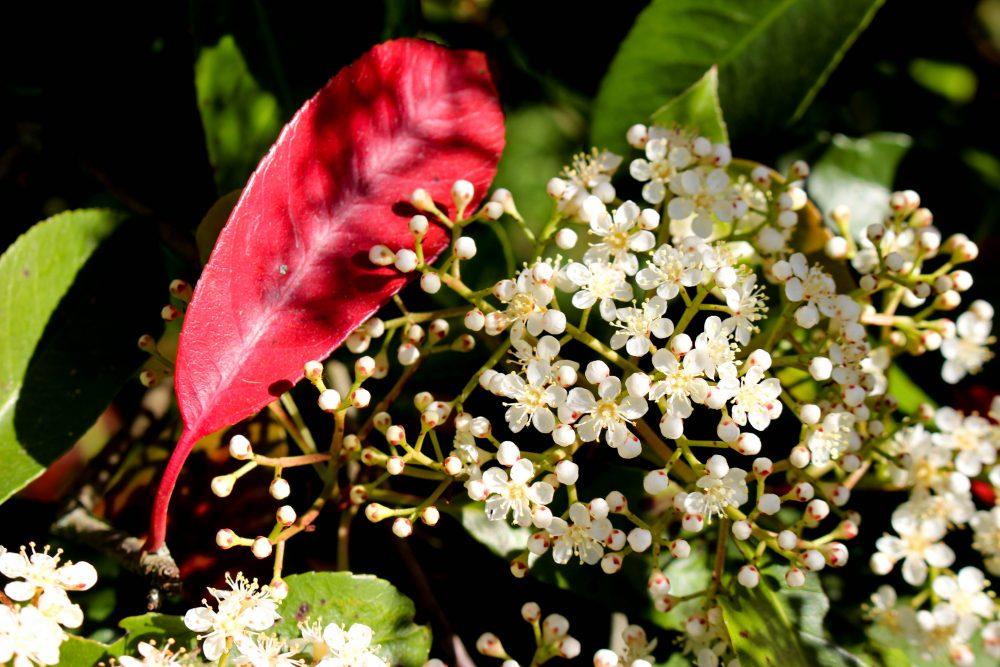 nantes parc floral
